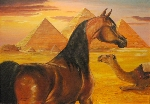 Arabian horse with pyramids