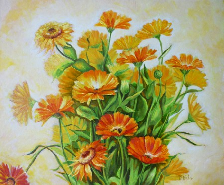 'Calendula ' in Grossansicht