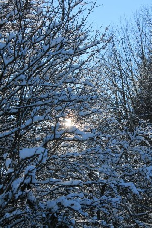 'Winter - inverno IMG 2775' in Grossansicht